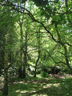 dandenong forest
