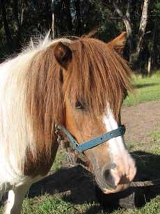 houdini pony