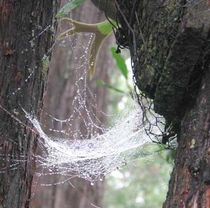 jewel web