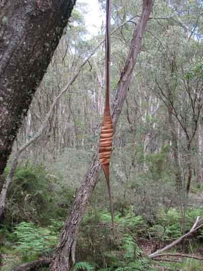 bark sculpture