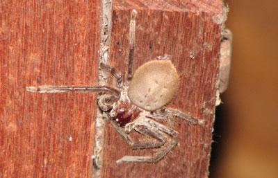 big-spider