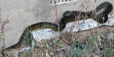 python-back-1