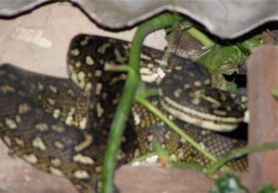 python-return-3