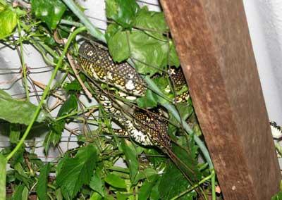 python-return-4