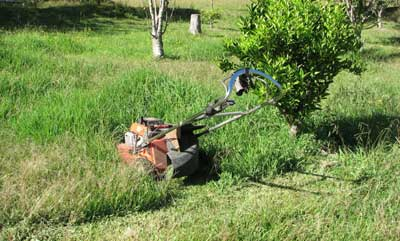 kikuyu grass stops mower