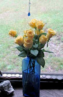 tuggerah-roses