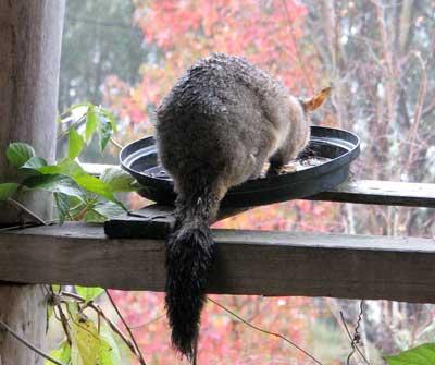 day-possum1