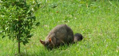 ex-possum1