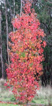 tree-light-1