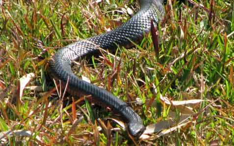 snake-zoom