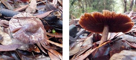 coast-fungi-3