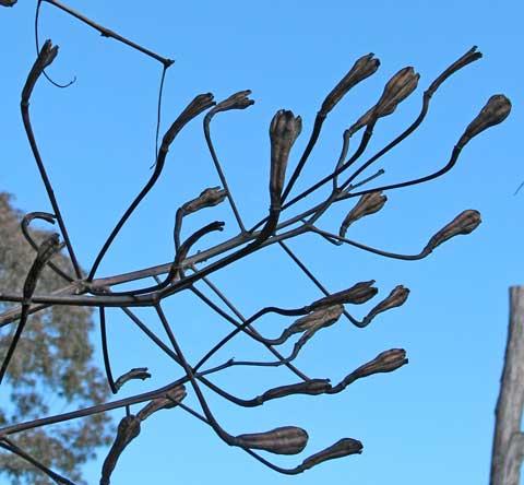 seeds-3-480