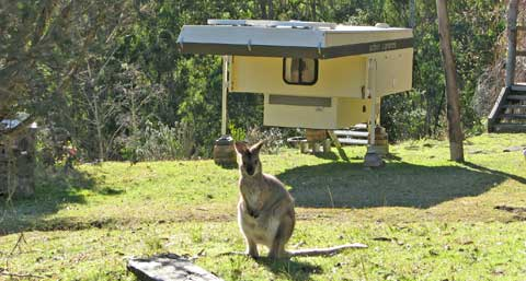 winter-wallabies-3