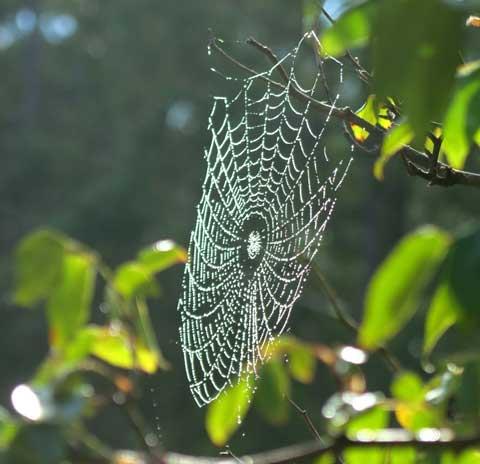 webs-2